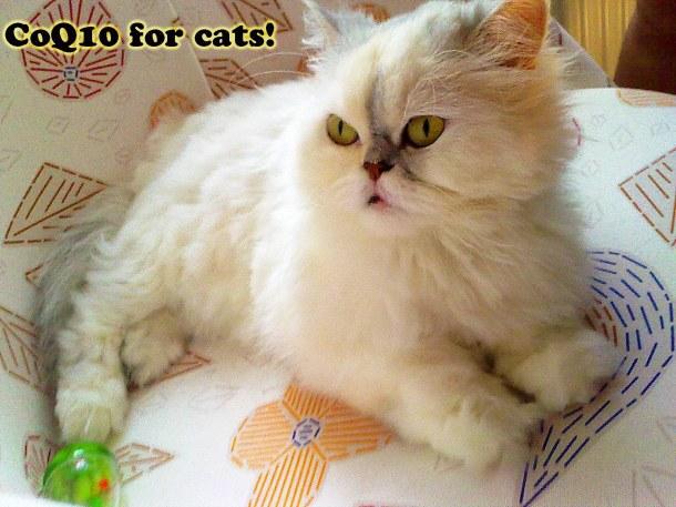 Kediler ve CoQ10