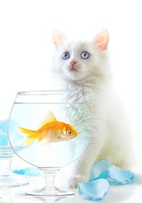 64124-290x414-Fish_dinner