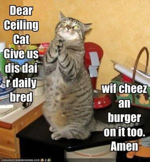 funny-pictures-cat-prays-for-bread-with-cheese-and-burger