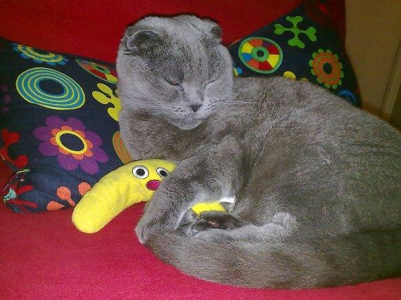 Modelimiz Misha hanım uyurken bile muzundan ayrılmıyor!