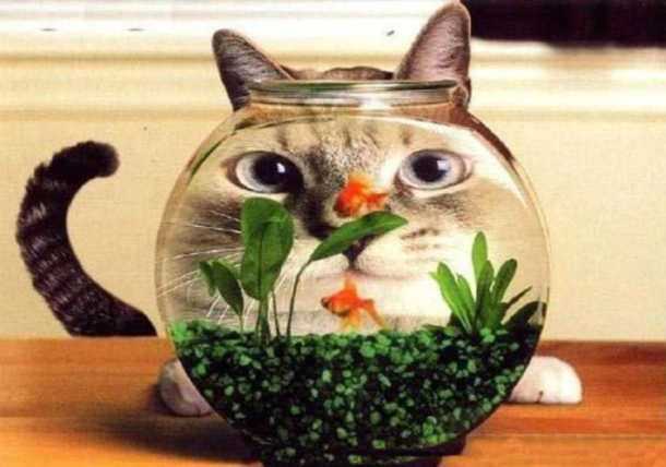 FishBowlCat_460x323
