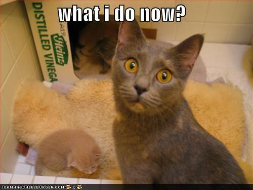 funny-pictures-mother-cat-is-confused