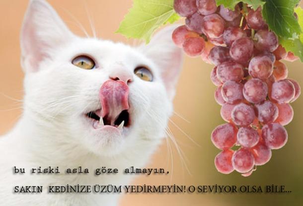 uzum-kediler-icin-zararlidir1
