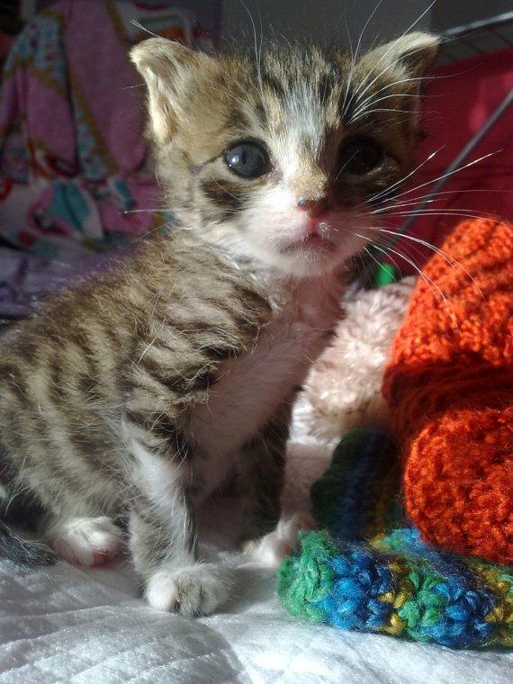 Melek olan bebek kedicik, gelişim geriliğine bağlı komplikasyonlar sonucu dayanamadı maalesef :(