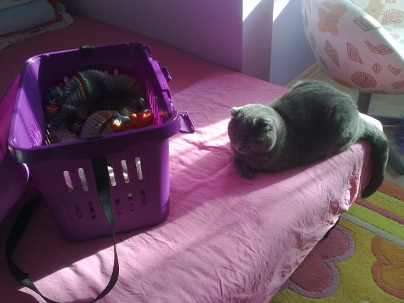 Misha ablası mor kutusunda uyuyan bebeğe refakat ediyor!