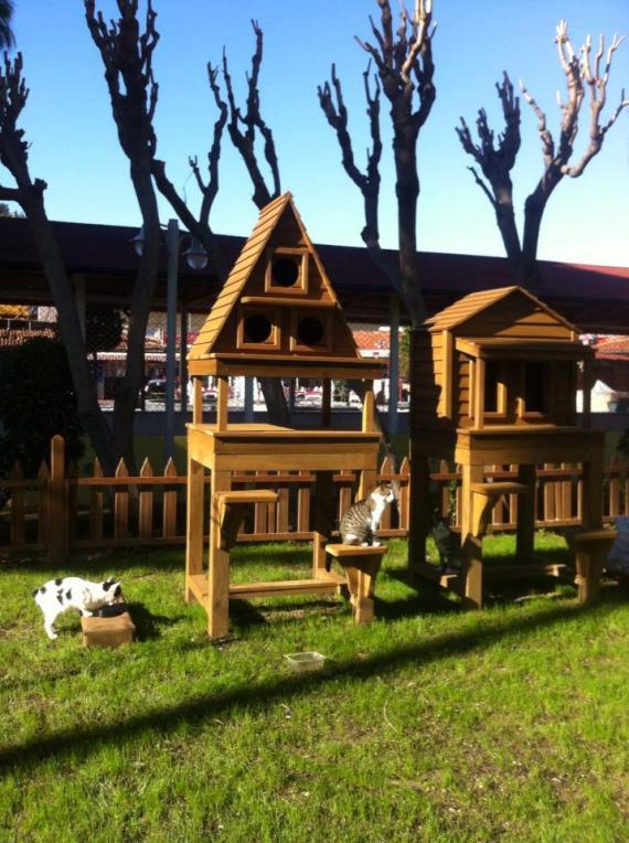 Alanya Belediyesi'nin doğa dostu kedi parkı/evi projesi