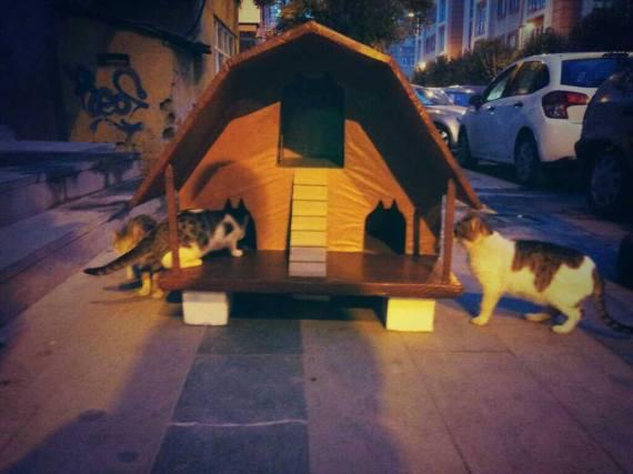 Bastet Tasarım'ın kedi malikanesi