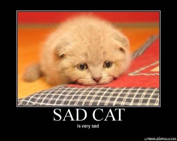 sad+cat_c89d66_3490245
