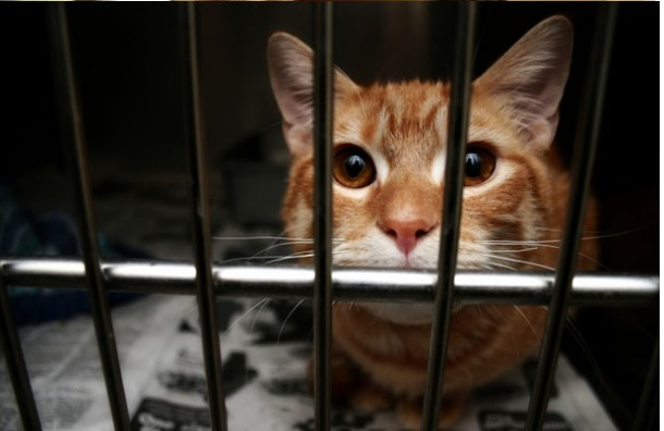 adopted-cat-cage-116492786