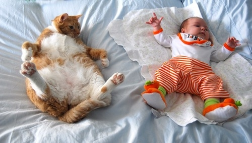 cat-and-baby