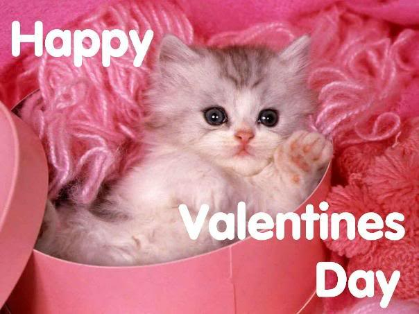 cat-on-val-day