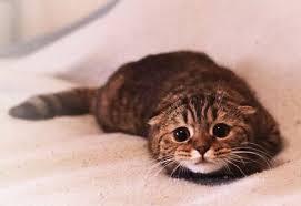 Kaçan bir kedi büyük ihtimal bu surat ile bir arabanın altında veya bir apartmanın izbeliğinde etrafı izliyor olabilir.