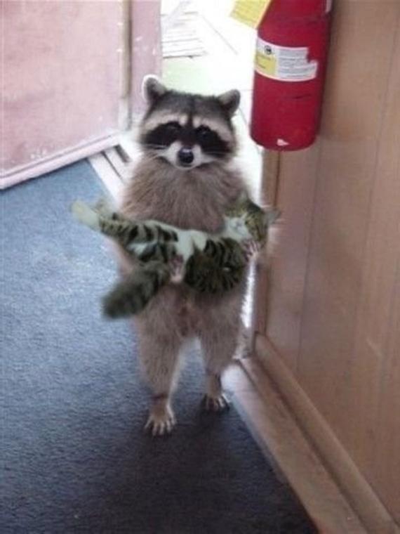 Çok şanslıysanız kedinizi kapınıza kadar getiren birileri de olabilir! :)