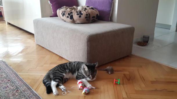 Cesur hemen oynamaya başlamış :)