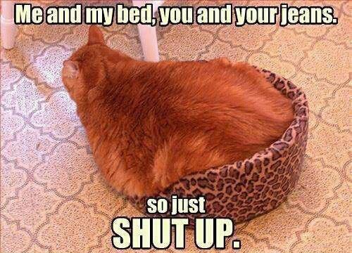 Funny-fat-cat-in-basket
