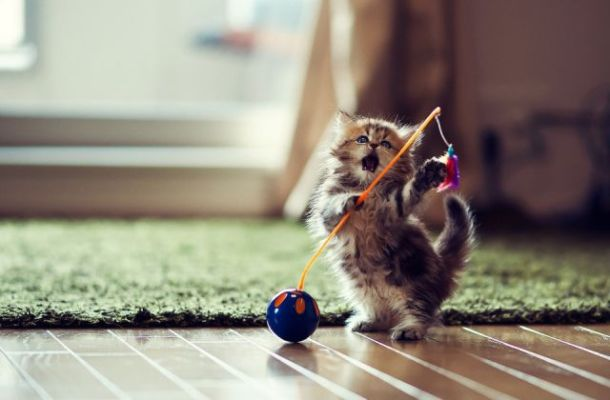 little-cute-kitten-shoot-of-the-millenium-1-1