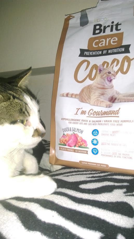 Gülben hanımın kedisi yılbaşı hediyesi olarak göndeirlen Brit Care Cocco mamayı dikkatle incelerken :)
