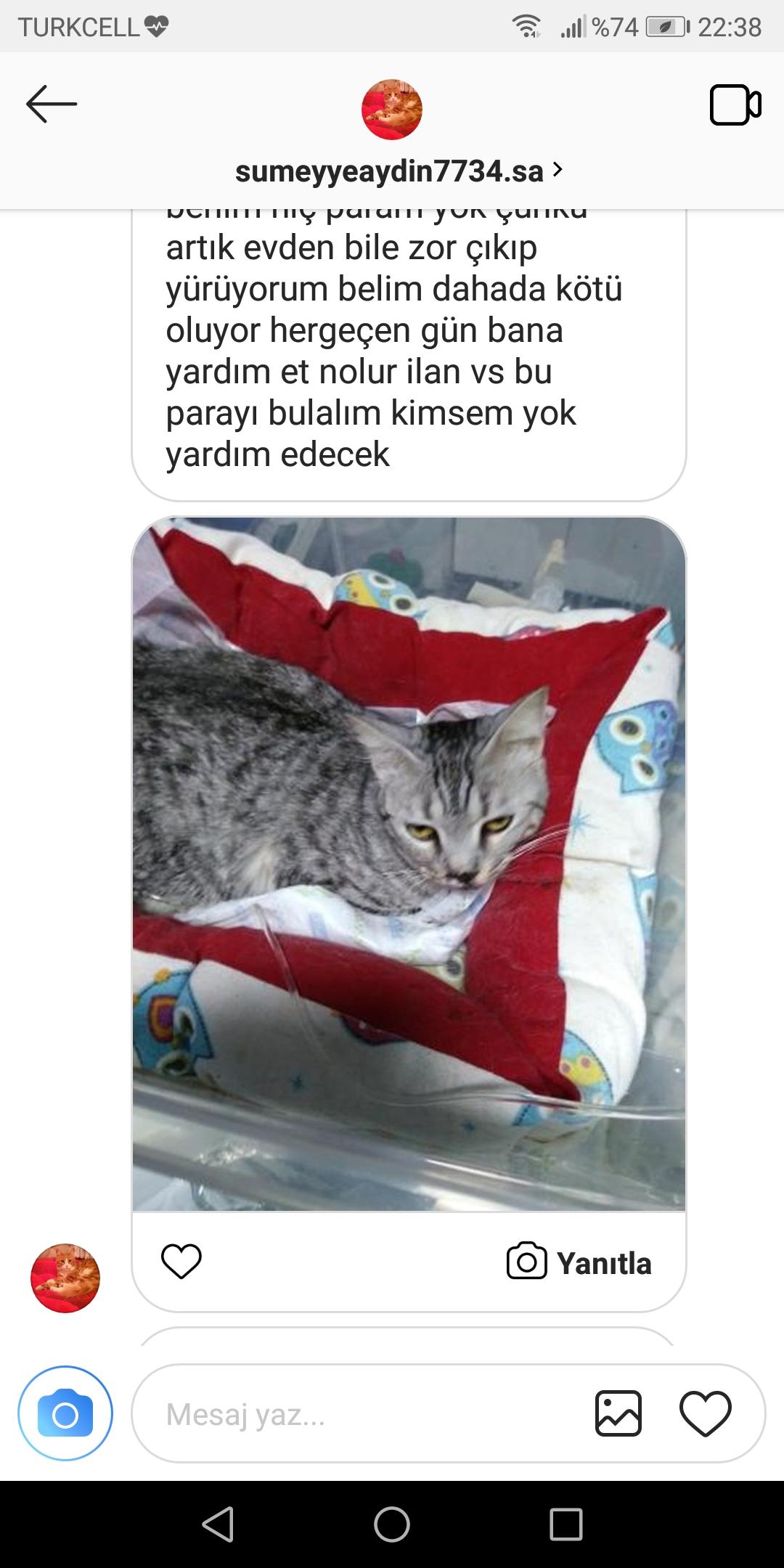 Kedi maması 1. seçim: ürün açıklaması, artıları ve eksileri
